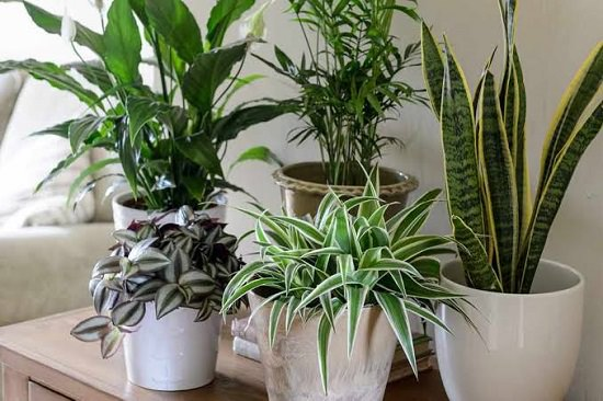 How To Reduce Indoor Air Pollution